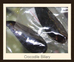 Crocodile Biliary